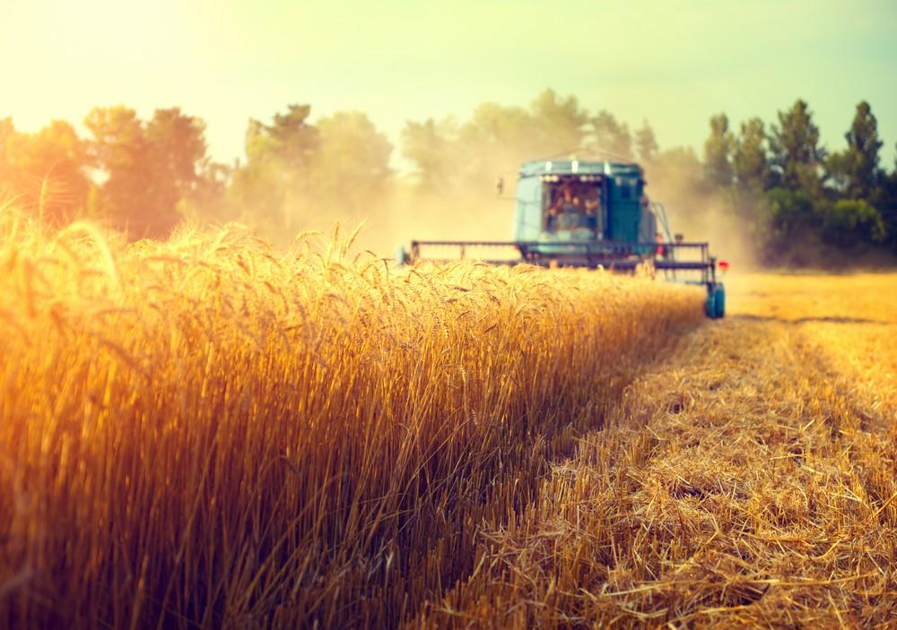 contabil pentru agricultori